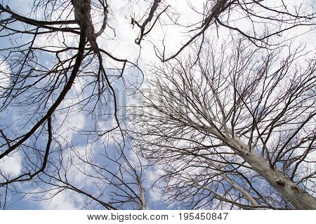 bare tree branches against the blue sky