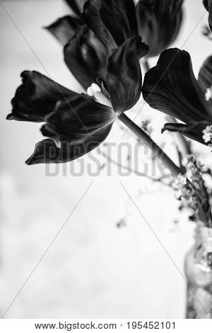 Beautiful Old Vintage English Garden Image Of Tulips In Glass Mason Jar In Black And White