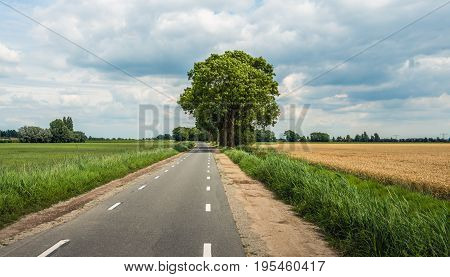 Country road in a Dutch agricultural landscape with grass and wheat growing on the fields. It's a cloudy day in the beginning of the summer season.