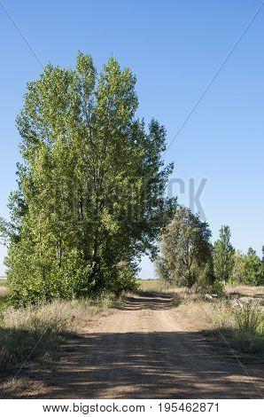 Poplar groves in the plain of the River Esla, in Leon Province, Spain