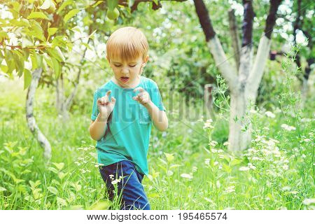 Carefree Boy Catching Insects In Summer Garden.