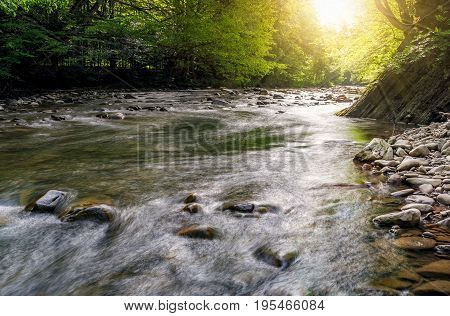 River Flow In Sunny Forest