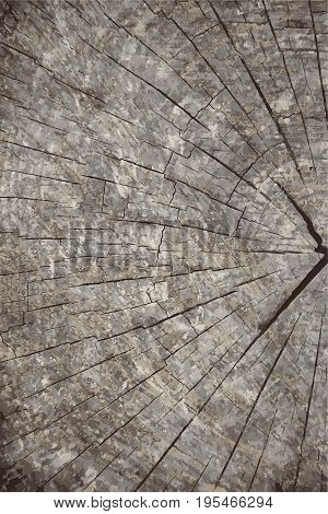 Vector grunge texture background.Natural wooden texture backdrop.