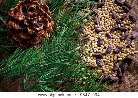 Cedar nuts in the shell and without it scattered on the table.