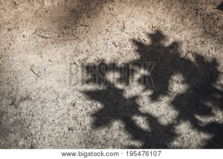 Shadow of maple leaves on the floor close-up sunny day copy space