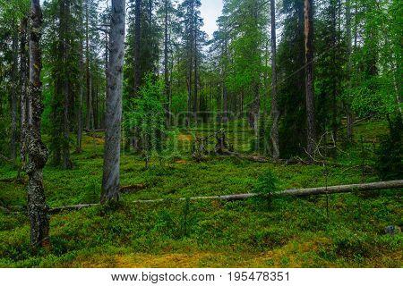 Rykimakero Trail, In Pyha-luosto National Park