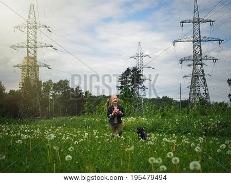 A girl with a dog playing in a field with a ball. Background high-voltage power lines. Summer warmth green grass