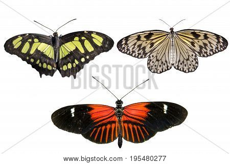 Real butterflies separate on white background - set 02
