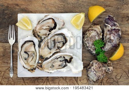 Oyster shellfish on ice on a square porcelain plate with a silver fork, lemon fruit and parsley herb on old wooden background.