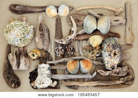 Abstract background of driftwood and seashells on sand.