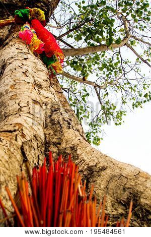 The worship with colored ribbons and incense sticks at the holy tree
