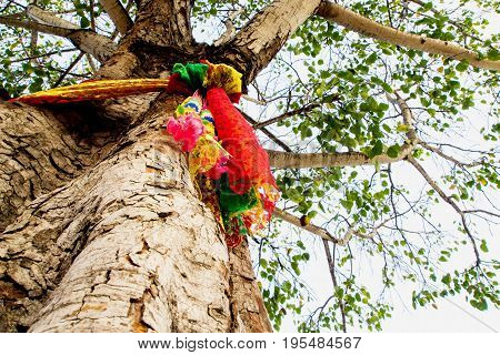 The worship with colored ribbons at the holy bodhi tree