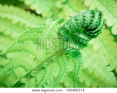Fern leaves, green leaf. Macro photo of leaves