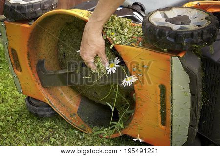 Male hand cleaning a lawn mower with grass and flowers stuck on the blade