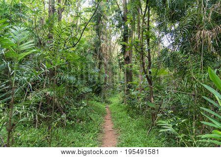 Walkway to tropical rainforest in Khao Yai National ParkThailand