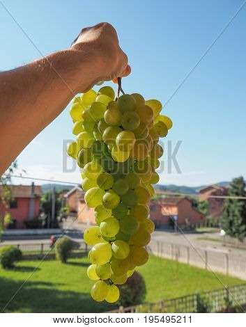 White Grape Fruit Food