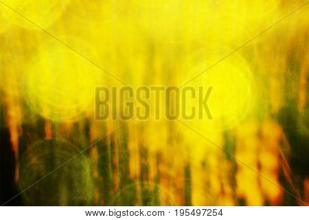 Film Effect. Defocused Flowers And Grass For Background. Blurred And De Focused Fresh Yellow Blossom