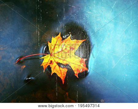 Film Effect.autumn Colors. Fallen Maple Leaf On Slippery Basalt Stone In Smoky Water. Cold Water Of