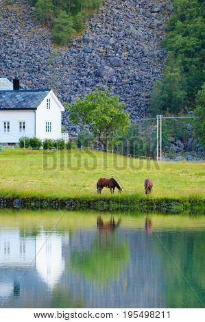 Horse in meadow field on lake shore. Tranquil countryside scene in Norway Scandinavia