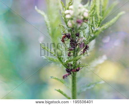 A Microcosm Of Insects.