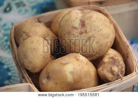 Potato (Solanum tuberosum) on sale at a farmers market