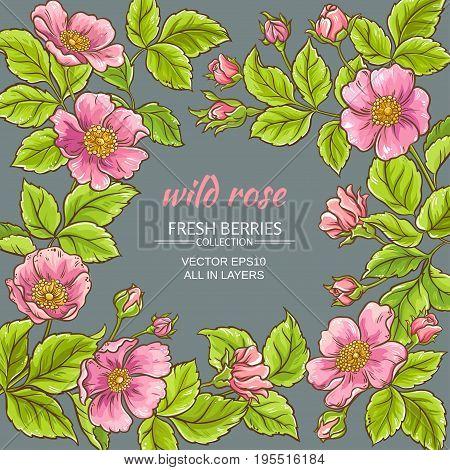 wild rose flowers frame on color background