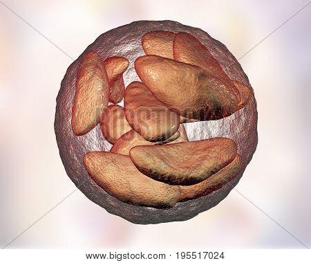 Parasitic protozoans Toxoplasma gondii in bradyzoites stage inside tissue cyst, 3D illustration