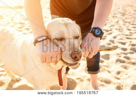 Portrait of young beautiful woman in sunglasses sitting on sand beach with golden retriever dog. Girl with dog by sea. Happiness and friendship. Pet and woman. Woman playing with dog on sea shore. Sun flare