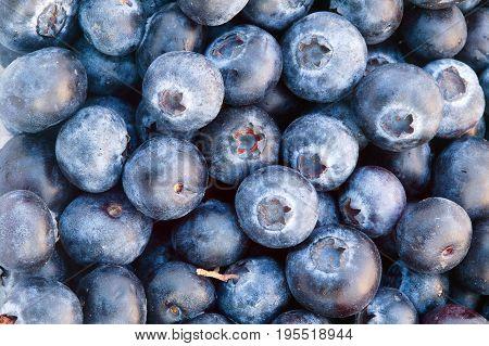 Fresh ripe in season blueberries fruit background