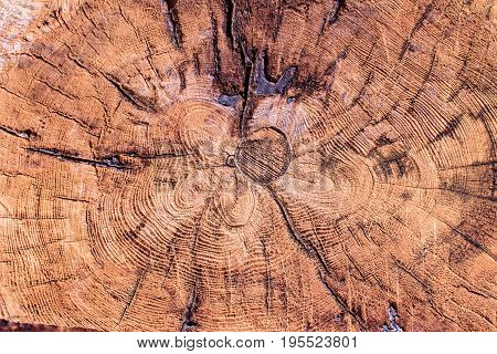 Tree rings old weathered wood texture with the cross section of a cut log showing the concentric annual growth rings as a flat nature background