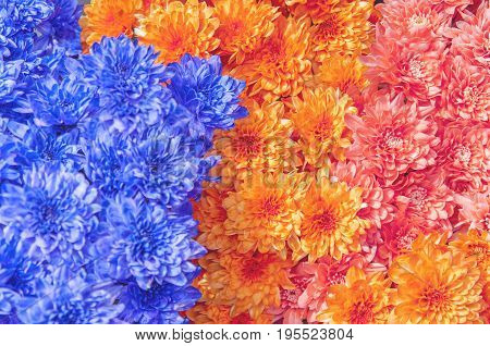 Colorful beautiful daisy flower bouqet background close