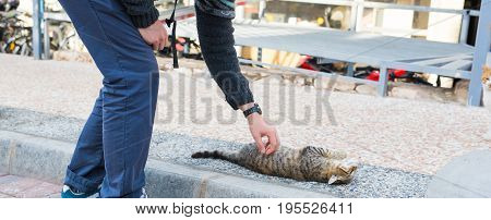 Homeless cat, pet and animals concept - Man stroking cat.