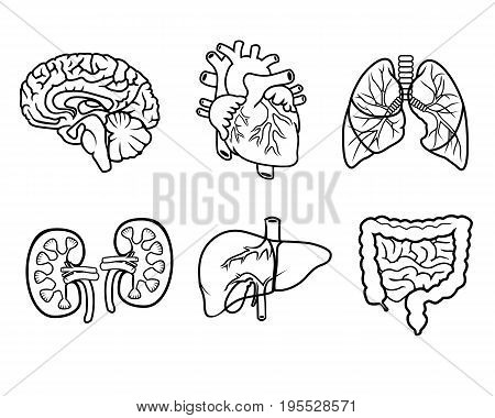 vector black and white icons of anatomical organs