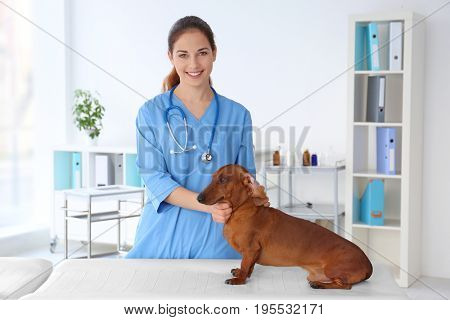 Woman with dog in veterinarian clinic for brushing teeth procedure