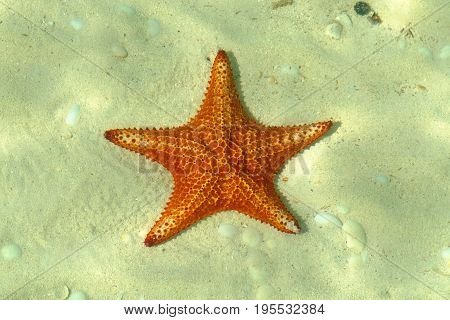 Orange starfish on the Caribbean seabed, Grand Cayman