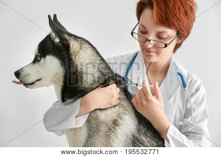 Veterinarian vaccinating husky dog on white background