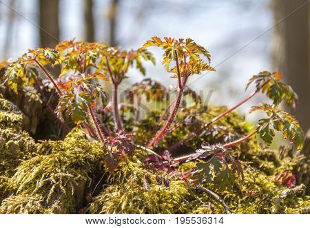 sunny illuminated forest plant detail at spring time