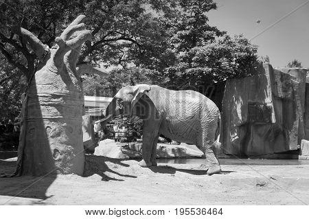 Big Elephant In A Milwaukee County Zoo