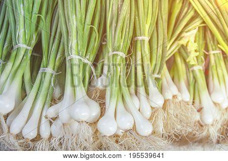 Fresh green healthy bio leek on farmer agricultural market on morning sunny day