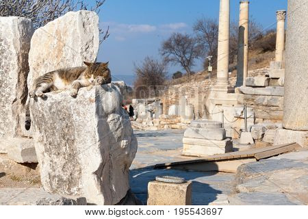 Cat On Roman Stone Columns  And Altar Ruins Room In Ephesus Archaeological Site In Turkey