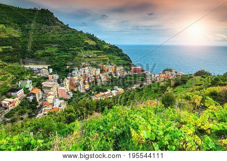 Amazing vineyard valley magical sunset and beautiful riviera of Cinque Terre Manarola town Italy Europe