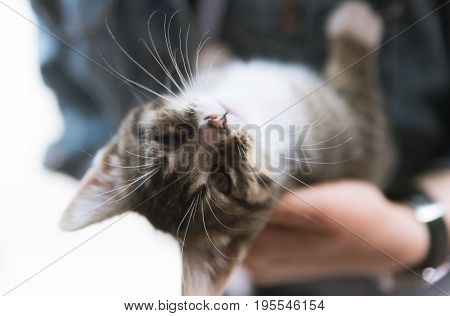 Little Kitten Laying In A Woman's Hand