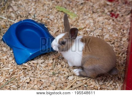 Small Young Rabbit On A Country Farm