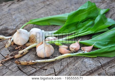 Wild garlic ramson or bear garlic with garlic bulb and garlic cloves on wooden background. Domestic and wild garlic.
