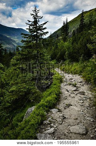 Landscape background Stone walkway into the valley