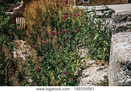 Flowers and shrubs with blue sky on the steps of Pope John XXII's Castle, in the village of Châteauneuf-du-Pape. In the Vaucluse department, Provence-Alpes-Côte d'Azur region, southeastern France