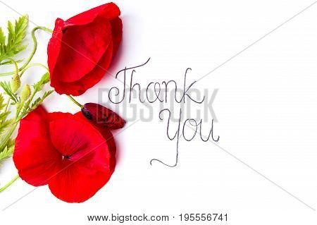 Thank You Card With Red Poppy Flowers