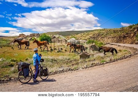 Woman cycling on the remote road in southern Argentina, taking pictures of a group of wild horses that just crossed the road in front of her