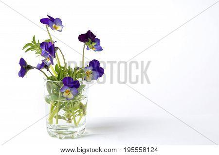 Wild Viola Flower In A Glass Vase