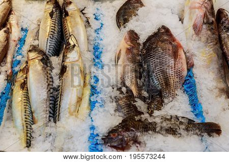 Fresh Sea Fish Lying On Ice On A Counter In Grocery Store